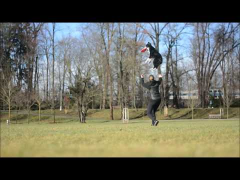 Frisbee + tricks (winter training)
