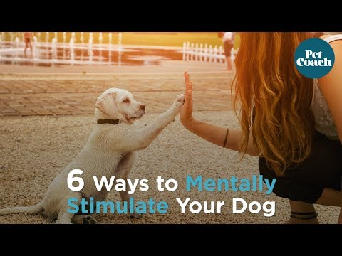 6 Ways To Mentally Stimulate Your Dog