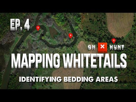 Part 4 - Mapping Public Land Whitetails | Identifying Bedding Areas