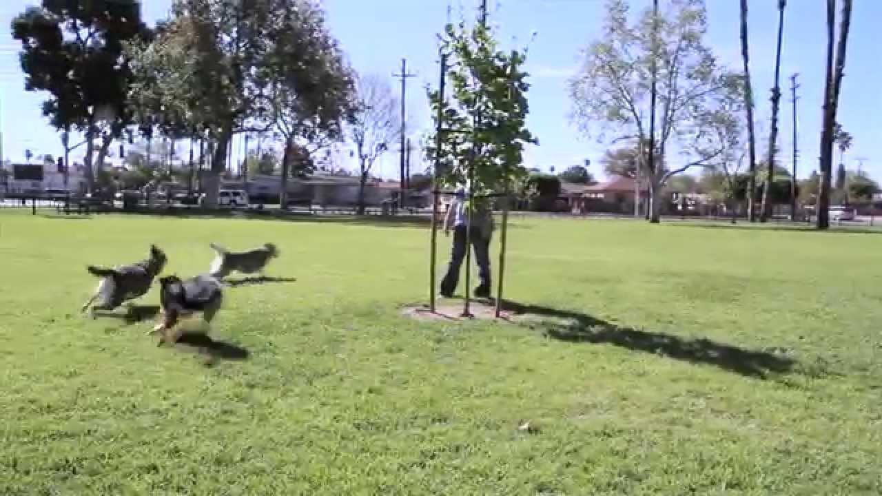 La Palma Dog Park Anaheim Ca