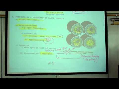 ANATOMY; CIRCULATORY SYSTEM; PART 5; HISTOLOGY OF BLOOD VESSELS by Professor Fink