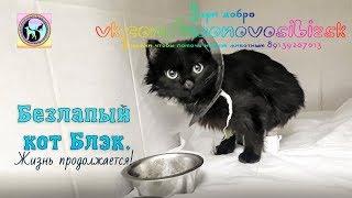 Спасение кота Учимся ходить на передних лапах  кот инвалид  disabled cat