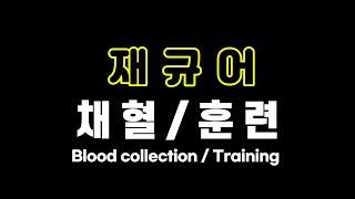 재규어 훈련 / 채혈 (jaguar trainning / blood collection)썸네일