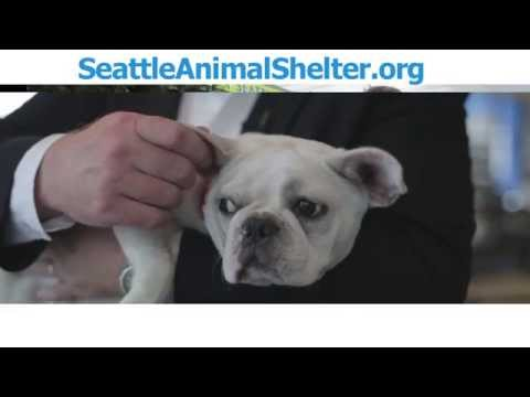 Seattle Animal Shelter About Us