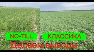 No-till Vs Класика. Озимая пшеница 2021.