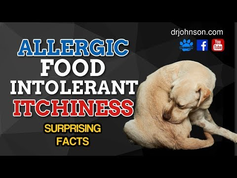 Food Adverse Reactions aka Food Allergies and Itchy Dog Skin