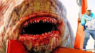 Download 15 BIGGEST Sharks in History