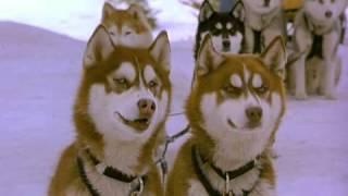 Снежные псы/Snow Dogs трейлер [LIVE-KINO.NET]