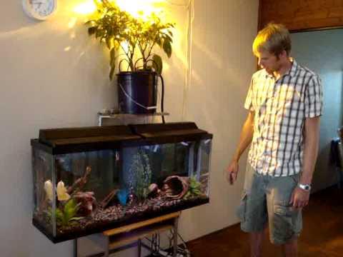 Aquaponics With Oscar Fish