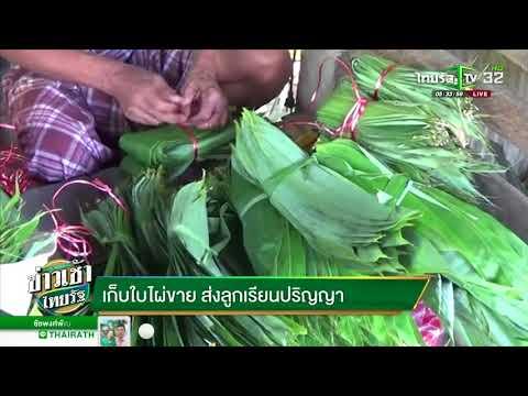 เก็บใบไผ่ขาย ส่งลูกเรียนปริญญา | 24-05-61 | ข่าวเช้าไทยรัฐ