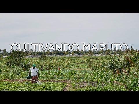 Cultivando Maputo (2018)