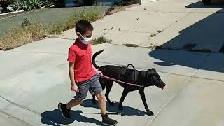 Little Boy Conquers Fear of dog with Gentle Leader Training