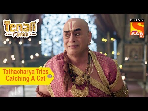 Your Favorite Character | Tathacharya Tries Catching A Cat | Tenali Rama