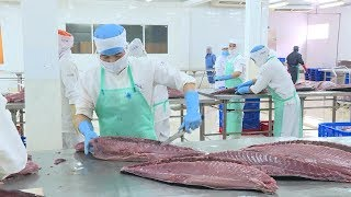 Tin Tức 24h Mới Nhất Hôm Nay : Xuất khẩu cá ngừ của Việt Nam dự báo sẽ gặp khó khăn