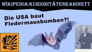 Die USA baut Fledermausbomben?! | Wikipedia:Kuriositätenkabinett #1