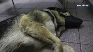 От кого ждать помощи: история безымянной собаки