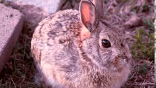 Rabbit Facts - Facts About Rabbits