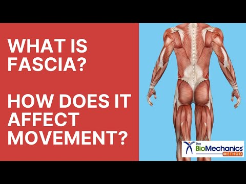 What is Fascia? How Does It Affect Movement?