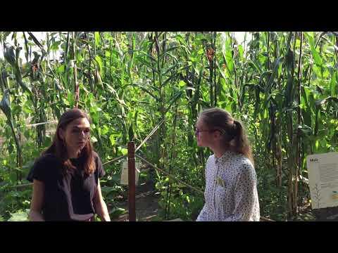 Interview mit Luisa Reyes Retana über die Milpa, die mexikanische Maiskultur und den OTHLI-Preis