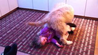 Baby gets beat up by dog