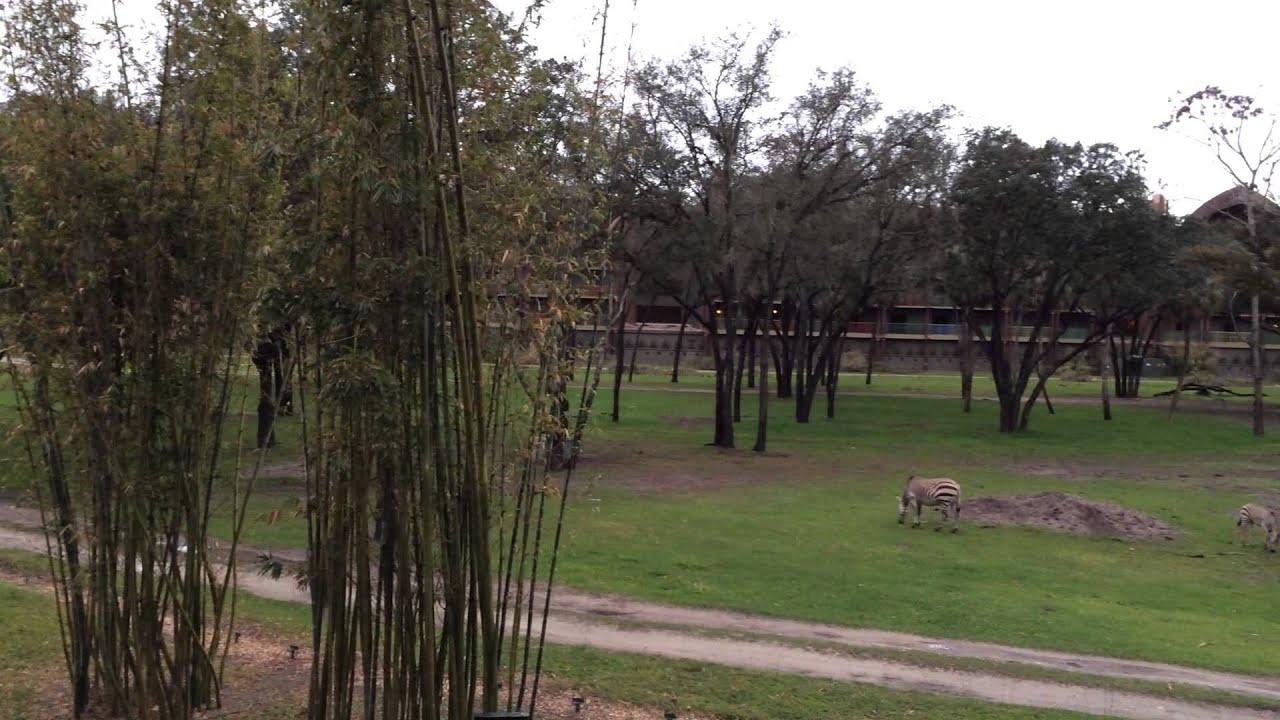 View Of Savanna From Disney World's Animal Kingdom Villas