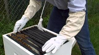 First Langstroth Bee Hive Inspection