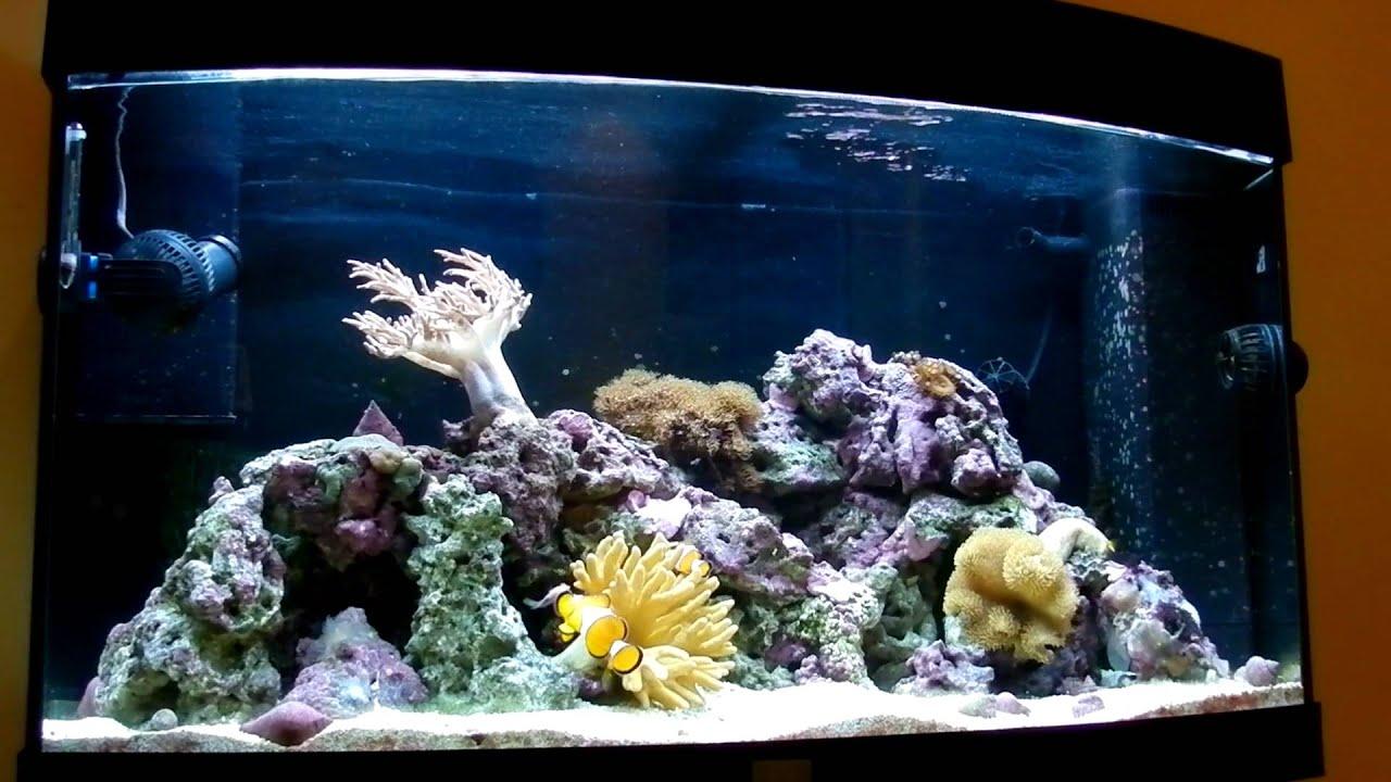 juwel vision 180 reef tank youtube. Black Bedroom Furniture Sets. Home Design Ideas