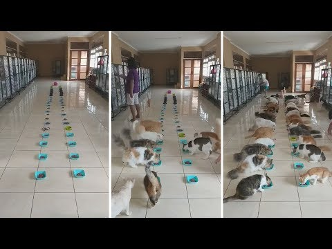 Rescue Cats Line Up For Their Dinner In Bali