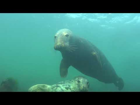Diveworld Videos | Diveworld with the Farne Island Seals