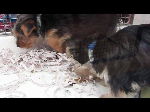 Dogs Eat Their Own Poop Disgusting Youtube