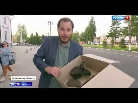 Кости мамонта нашли в болотах г.Рошаль