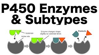 P450 Enzyme System (Inducers, Inhibitors, & Subtypes)