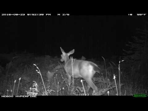 BluffCreekProject Elk Valley cameras, Siskiyou Mountains, California: Summer 2016