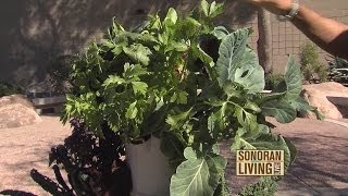 Garden Fresh Vegetables On Your Patio With Tower Garden