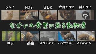 台風11号の後の猫たちの安否 thumbnail