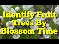 Identify Fruit Trees By Blossoming Time