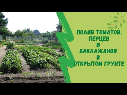 Полив томатов,  перцев и  баклажанов в открытом грунте