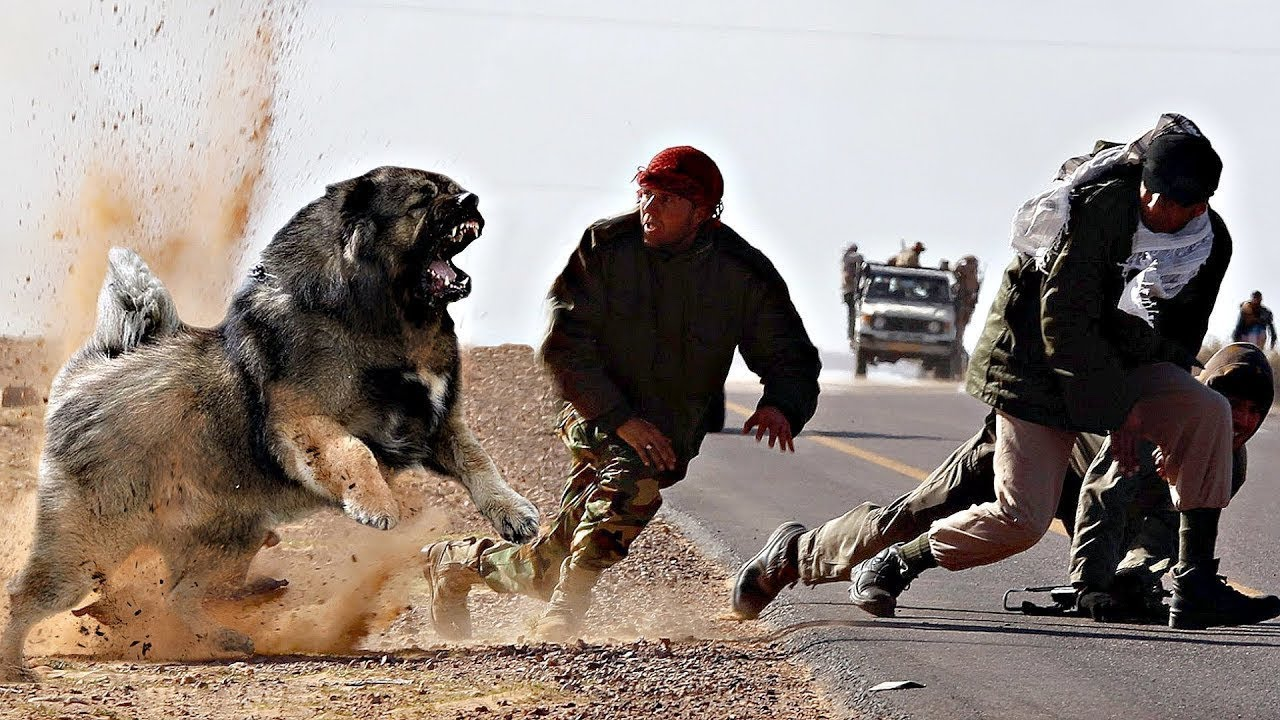 Ultimate Attacking Guard Dogs