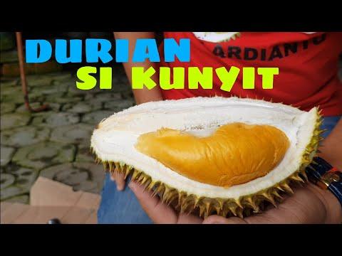 DURIAN SI KUNYIT, INI BARU DURIAN