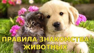 Правила знакомства животных