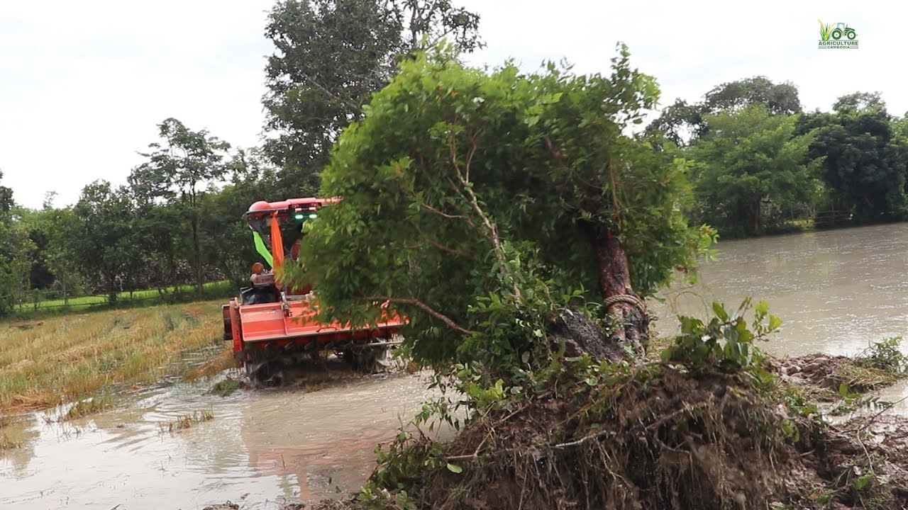 Amazing Tractor Kubota L5018 2021 Strong Pulled a tree without effort. |Agricultural Machines 2021|