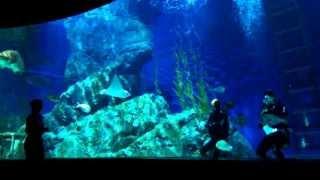 Bangkok Oceanarium