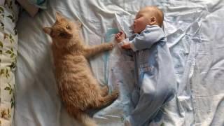 Львята-котята спят