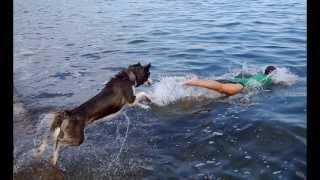 Бесстрашный плавающий хаски. Прыжок в воду.(Наш хаски взят в московском питомнике. Но мы живем в Крыму, поэтому он любит купаться. Совершенно бесстрашно..., 2013-10-09T12:55:08.000Z)