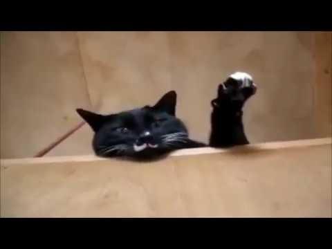 Кошки и собаки. 2. Смешно. cats and dogs. funny 有趣的