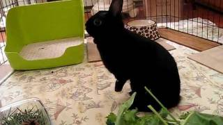 Adoptez la lapine Luna! - Adopt Luna the rabbit! Video 3