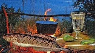 Уха из Налима( Fish soup of Burbot)