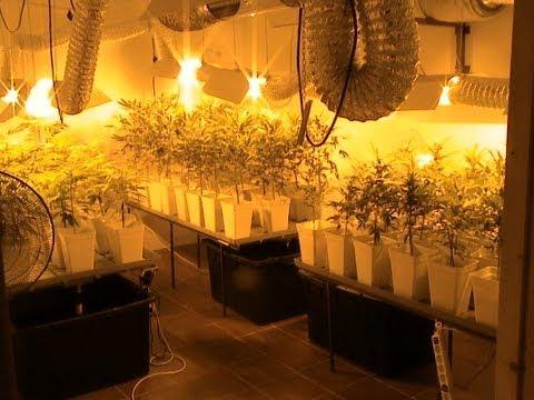 Cultivo indoor cap iv sistemas hidrop nicos y aerop n for Cultivo interior casero