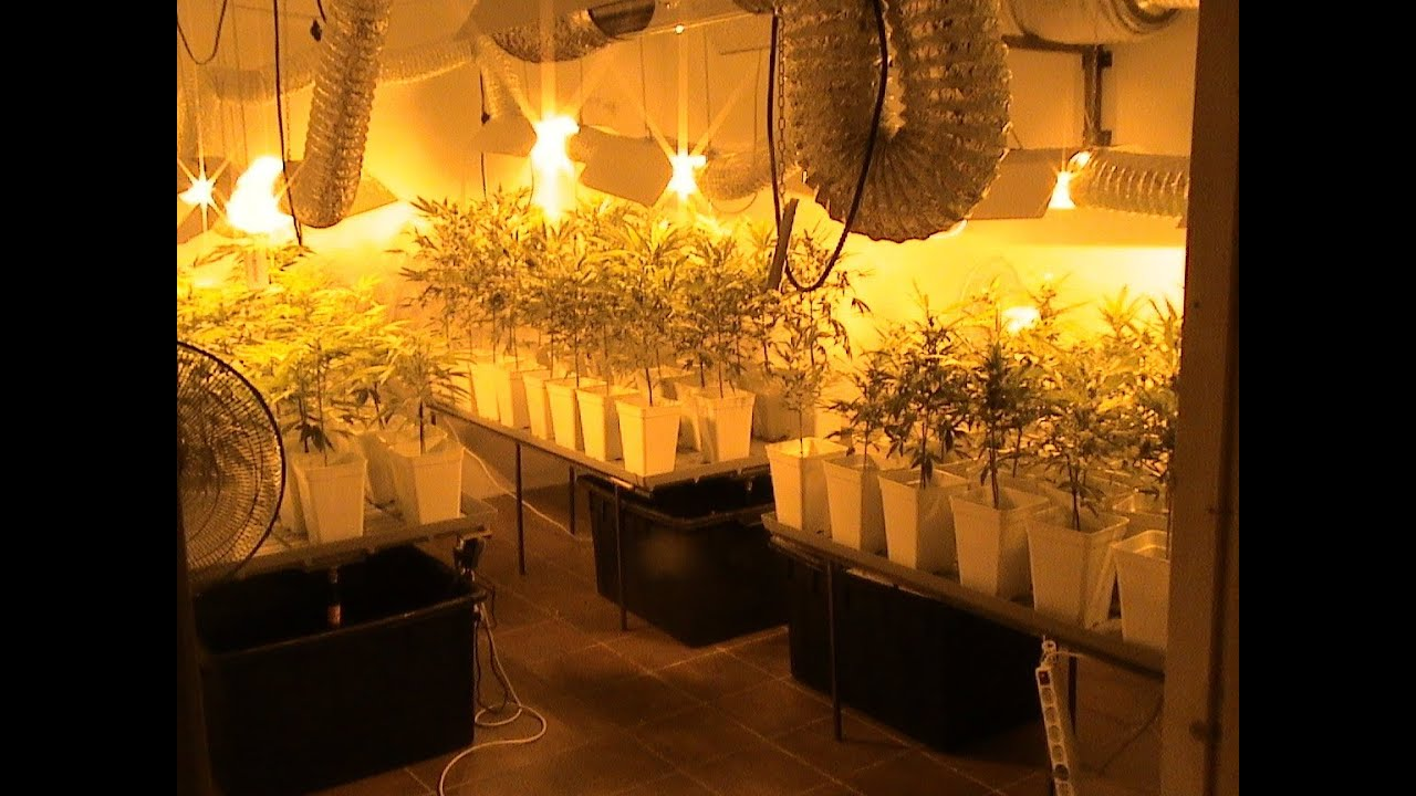 Cultivo marihuana interior coco por inundaci n youtube for Marihuana interior produccion