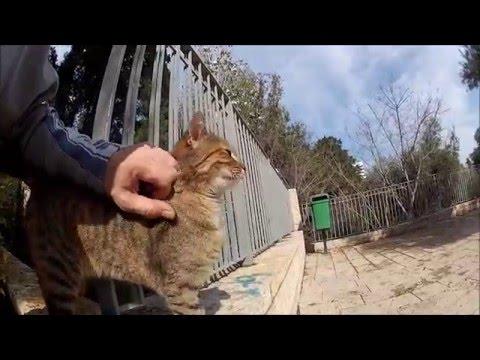 Stalker cat follows me all week demands petting